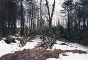 lot with trees down